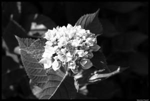 summer garden-6-BM