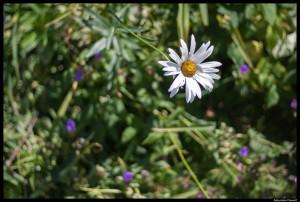 summer garden-8-BM